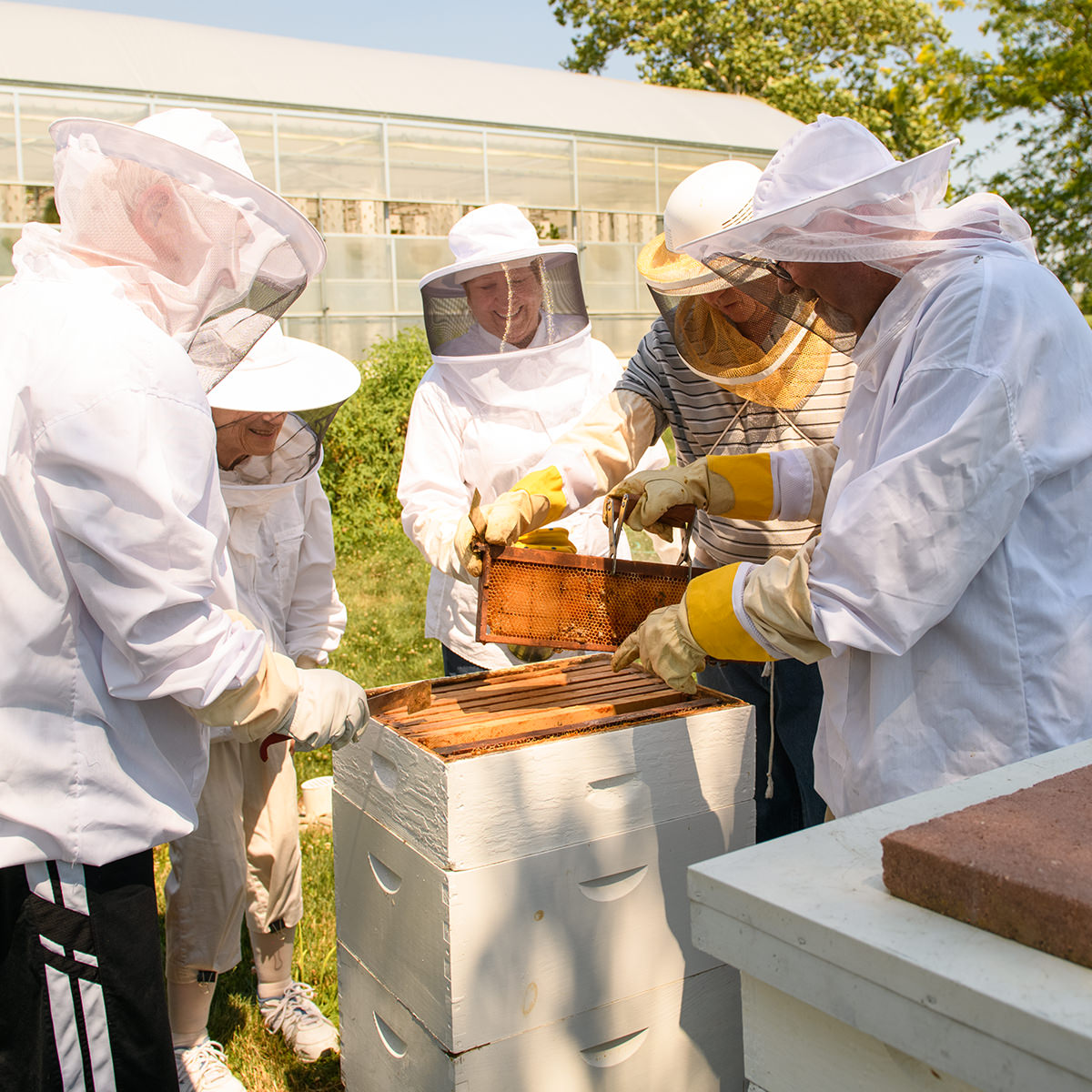 The Bee Club at Garden Spot Village check and take care of their bee hives.