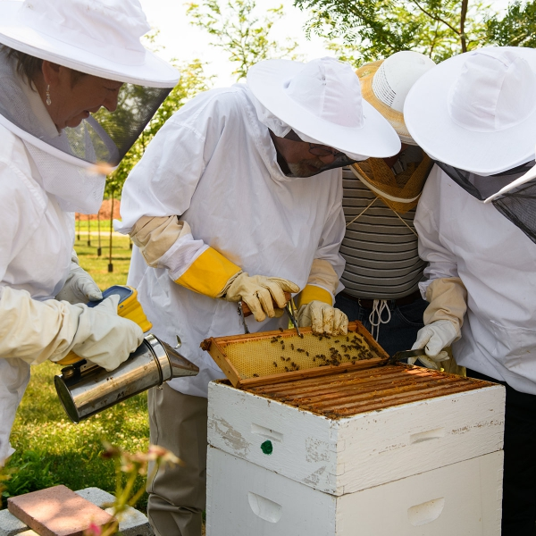 Garden Spot Village Bee Club members check on the honey bee hive on campus.