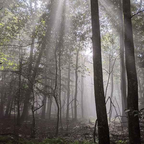 The sunlight streaming through the trees on the Appalachian Trail in Virginia